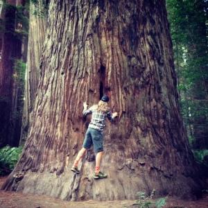 RedwoodsMark